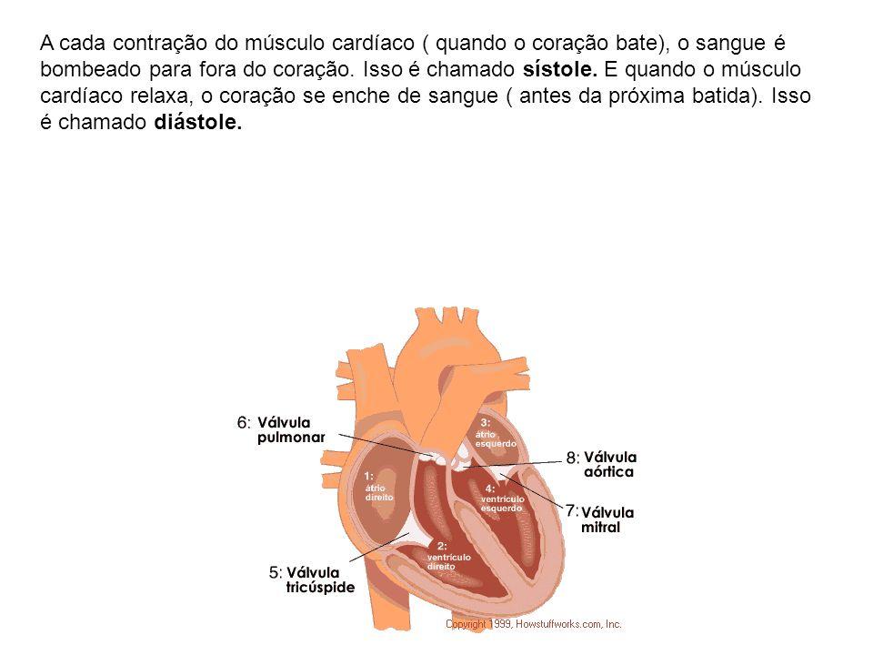 A cada contração do músculo cardíaco ( quando o coração bate), o sangue é bombeado para fora do coração. Isso é chamado sístole. E quando o músculo ca