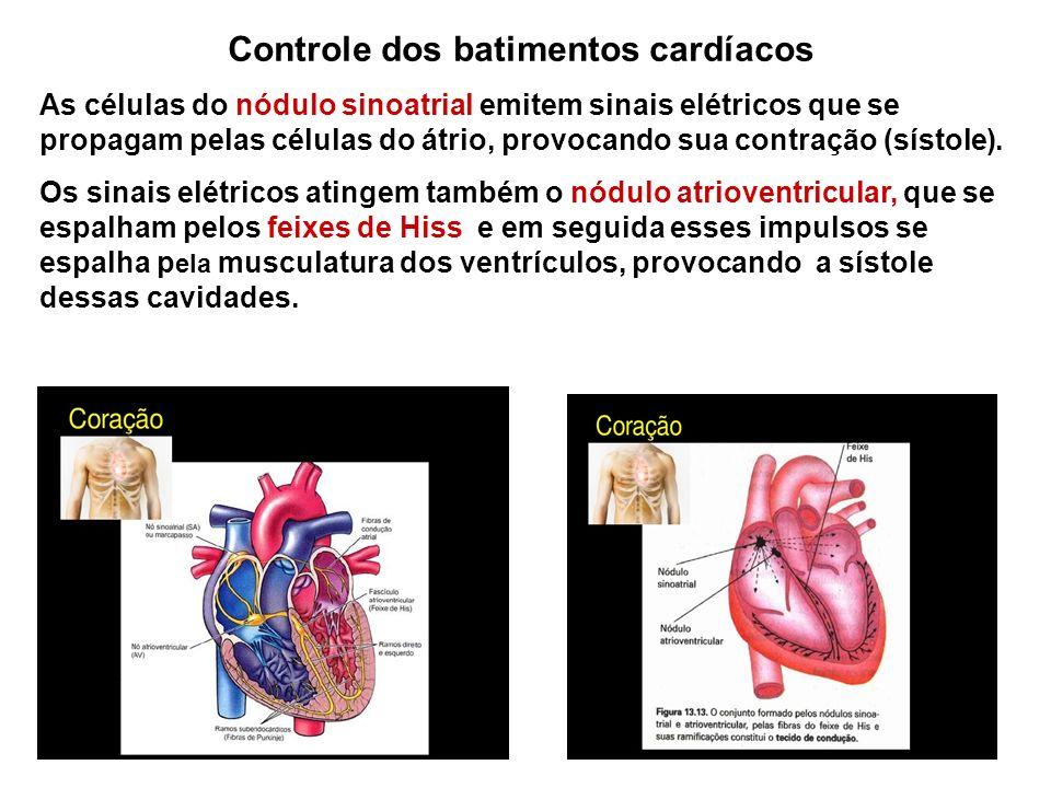 Controle dos batimentos cardíacos As células do nódulo sinoatrial emitem sinais elétricos que se propagam pelas células do átrio, provocando sua contr