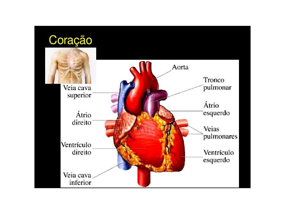 Nas veias das pernas, são encontradas válvulas que, com seus movimentos de abertura e fechamento facilitam o retorno do sangue para o coração.