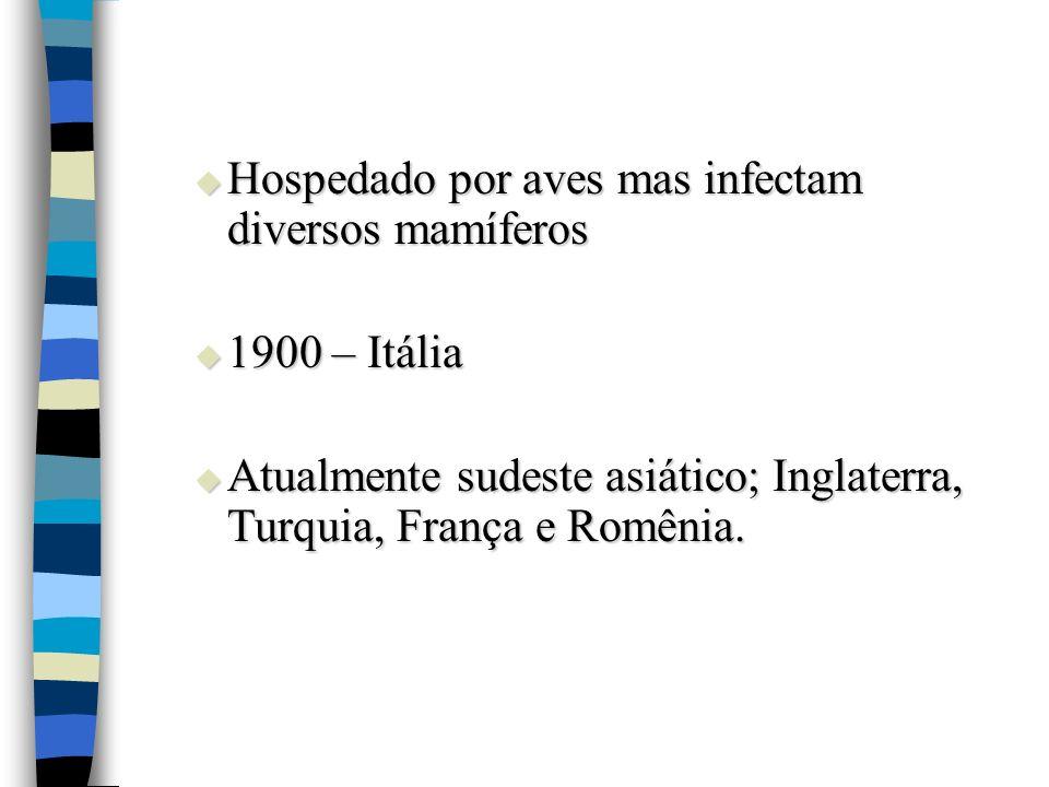 Hospedado por aves mas infectam diversos mamíferos Hospedado por aves mas infectam diversos mamíferos 1900 – Itália 1900 – Itália Atualmente sudeste a