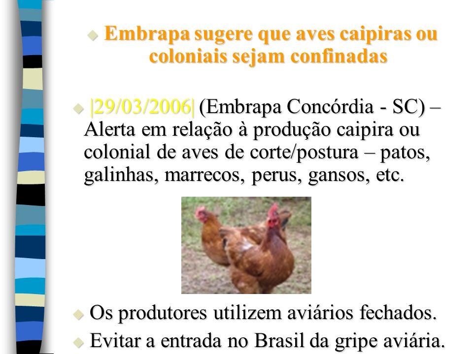 Embrapa sugere que aves caipiras ou coloniais sejam confinadas Embrapa sugere que aves caipiras ou coloniais sejam confinadas |29/03/2006| (Embrapa Co