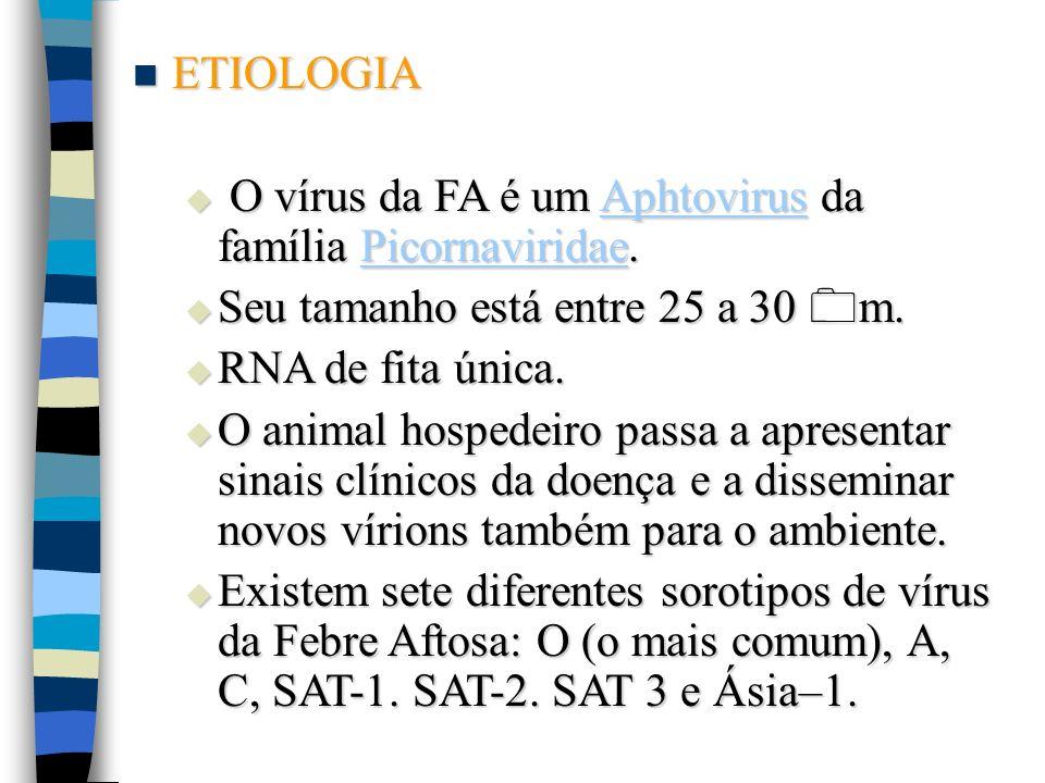 ETIOLOGIA ETIOLOGIA O vírus da FA é um Aphtovirus da família Picornaviridae. O vírus da FA é um Aphtovirus da família Picornaviridae. AphtovirusPicorn