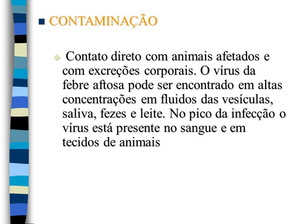CONTAMINAÇÃO CONTAMINAÇÃO Contato direto com animais afetados e com excreções corporais. O vírus da febre aftosa pode ser encontrado em altas concentr