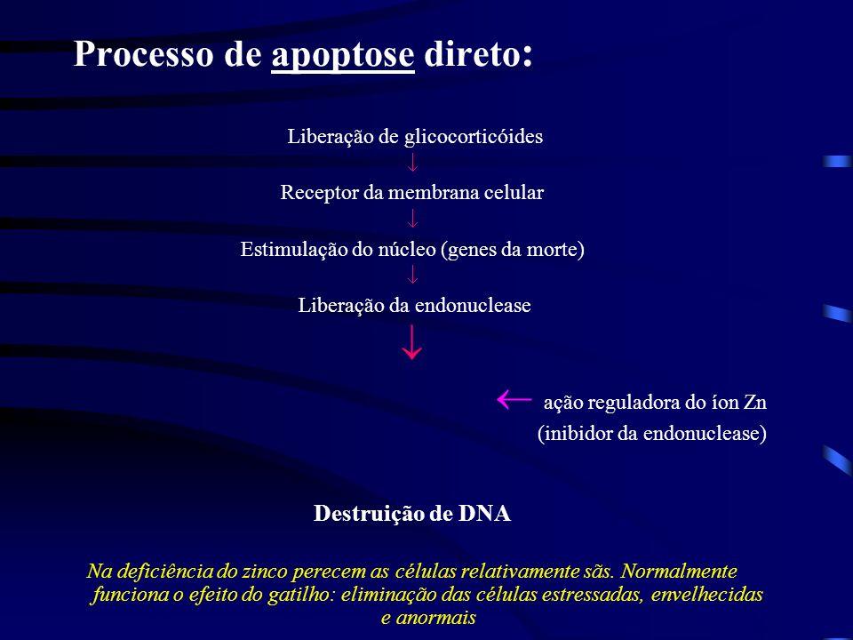 Metabolismo do zinco Sistema imunológico Efeitos da deficiência do zinco no sistema imunológico Fatores que afetam a produção de linfócitos: 1.Menor p