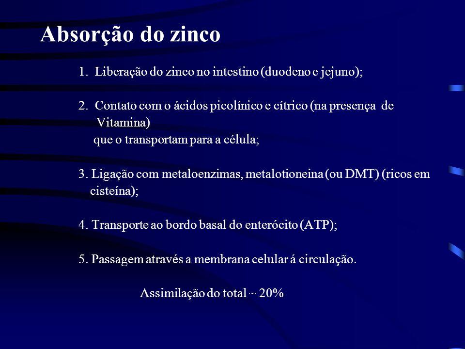 Metabolismo do zinco Crescimento do organismo 1.Hormônio de crescimento (produzido na hipófise; necessita a presença de altas concentrações do zinco); A mensagem hormonal deve chegar e ser processada para que a replicação ocorra (transdução do sinal mitogênico) 2.Fator de crescimento I tipo insulina (regulação da utilização de aminoácidos e de glicose; faz que o hormônio de crescimento seja acessível aos tecidos)