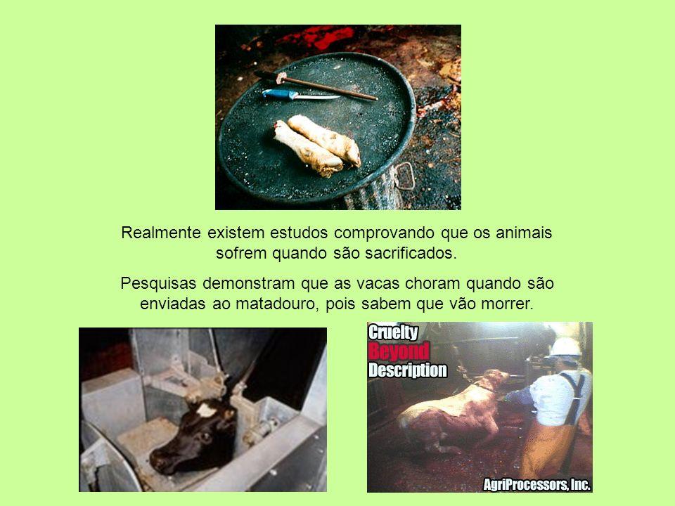 Realmente existem estudos comprovando que os animais sofrem quando são sacrificados.