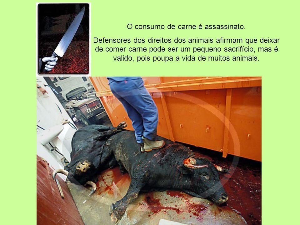 O consumo de carne é assassinato.