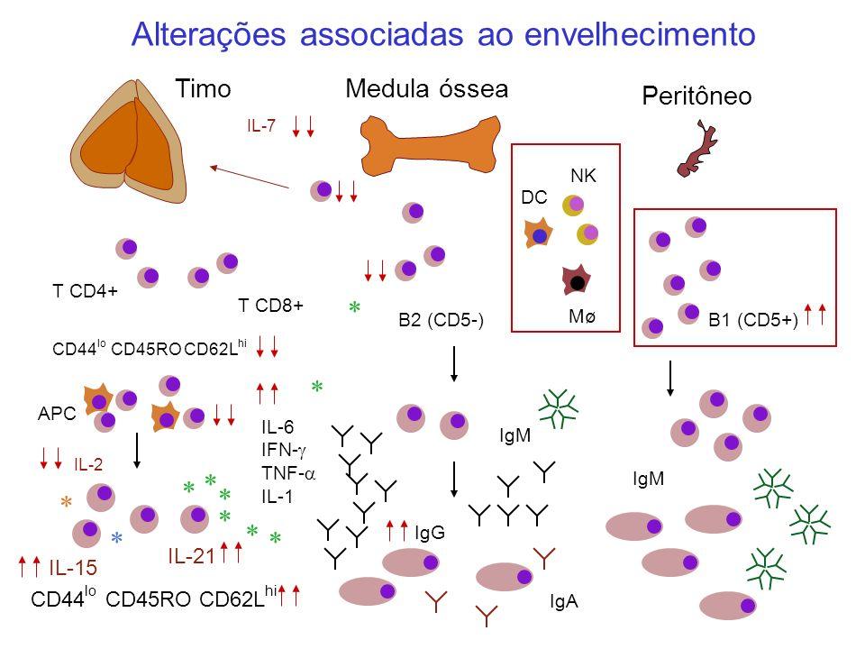 T CD4+ T CD8+ B2 (CD5-) TimoMedula óssea Peritôneo IgM * * * * * * * NK Mø DC APC IgA IgM IL-7 IL-2 IL-21 IL-15 * * * CD44 lo CD45RO CD62L hi B1 (CD5+