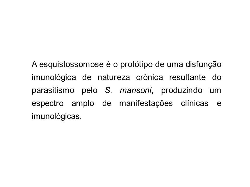 A esquistossomose é o protótipo de uma disfunção imunológica de natureza crônica resultante do parasitismo pelo S. mansoni, produzindo um espectro amp