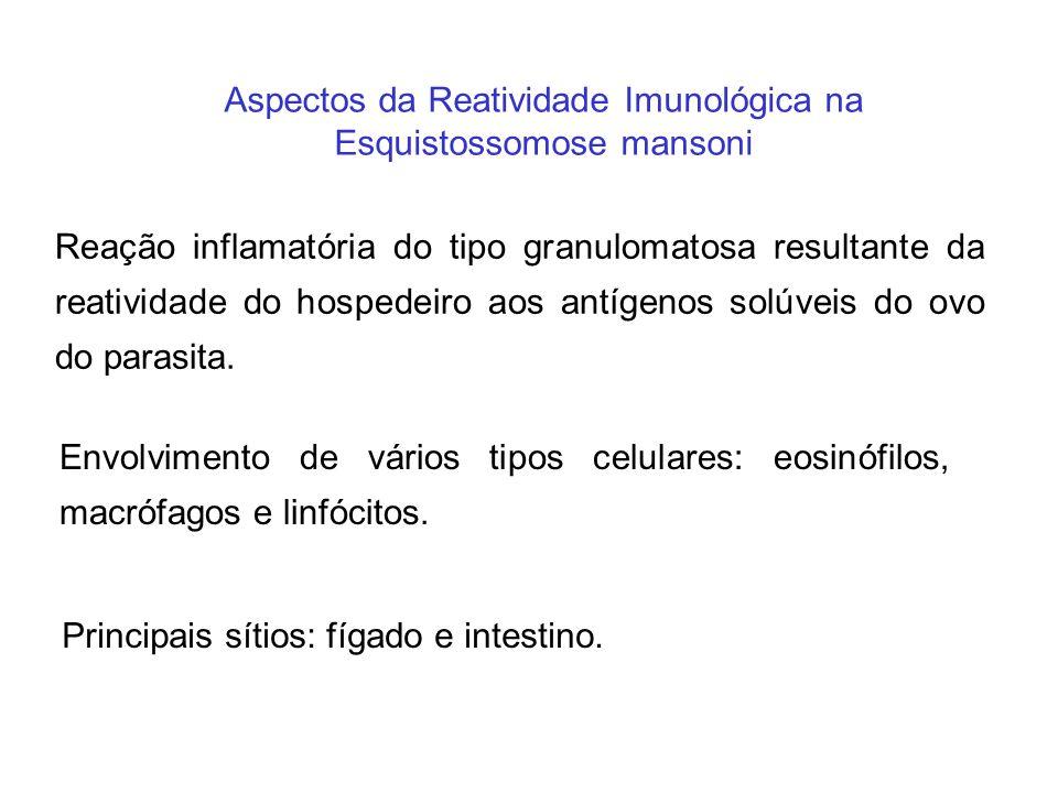 Aspectos da Reatividade Imunológica na Esquistossomose mansoni Reação inflamatória do tipo granulomatosa resultante da reatividade do hospedeiro aos a