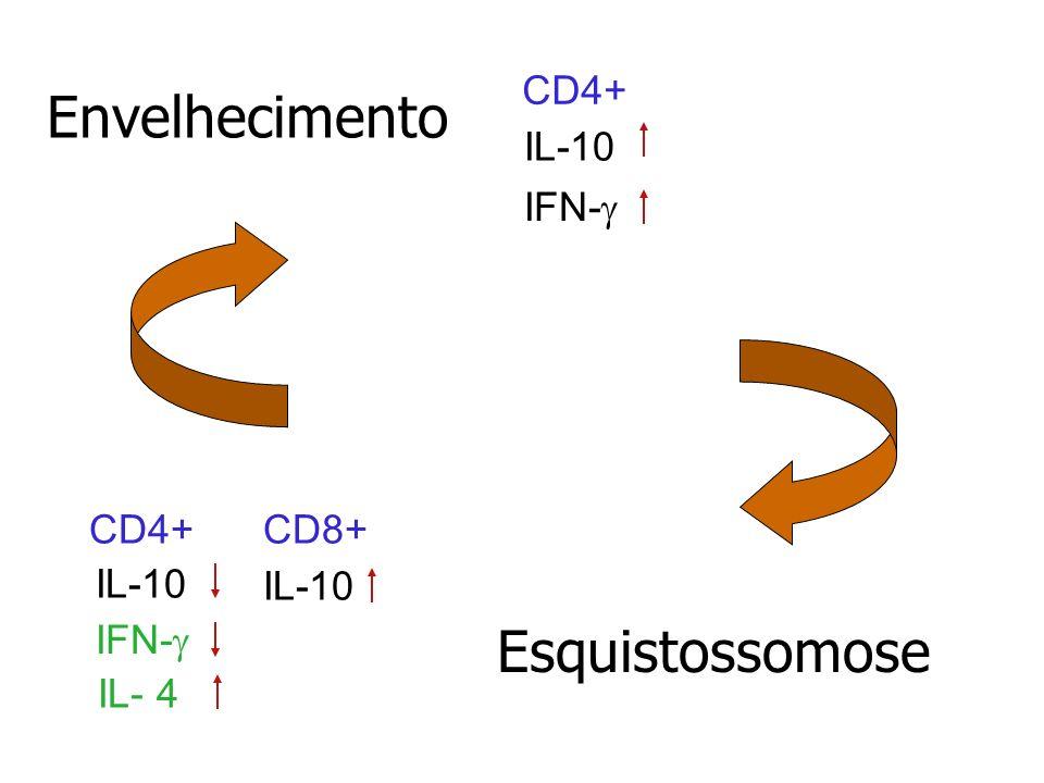 Envelhecimento Esquistossomose CD4+ CD8+ IL-10 IFN- IL-10 IL- 4 IFN-