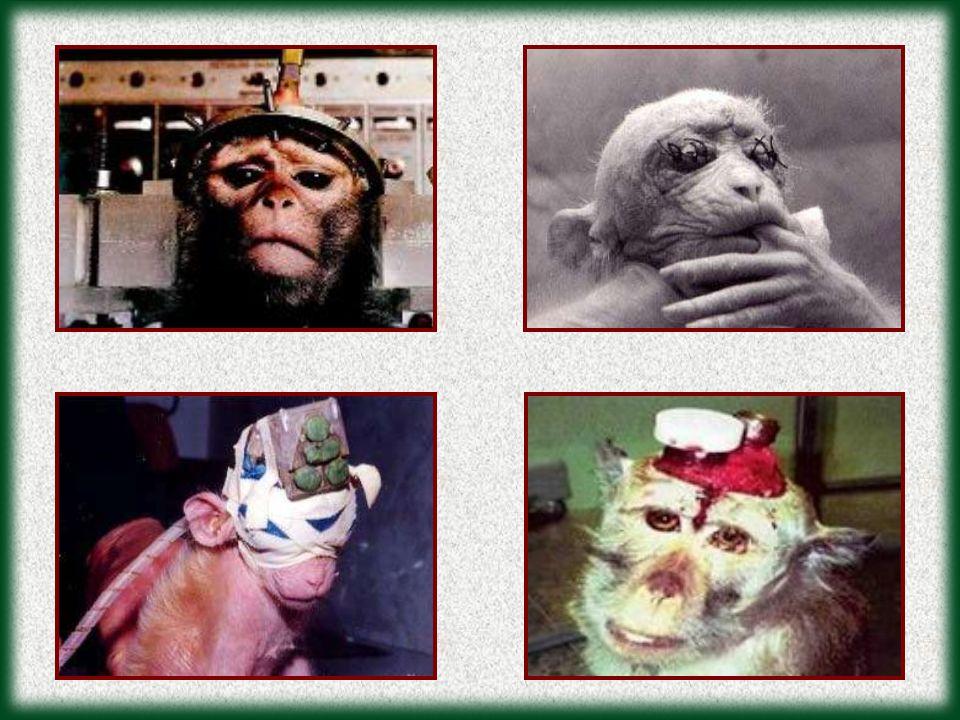 Farmaervas (cosméticos) Florestas** (cosméticos) Gillette Company* (pilhas, lâminas de barbear) L anza Research International (cosméticos) Lush (cosméticos) Mahogany** (cosméticos) Nivea (Beiersdorf) Norelco (barbeadores) Revlon (cosméticos) St.