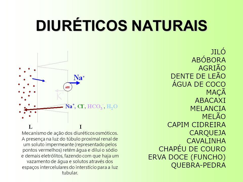 DIURÉTICOS NATURAIS Mecanismo de ação dos diuréticos osmóticos. A presença na luz do túbulo proximal renal de um soluto impermeante (representado pelo