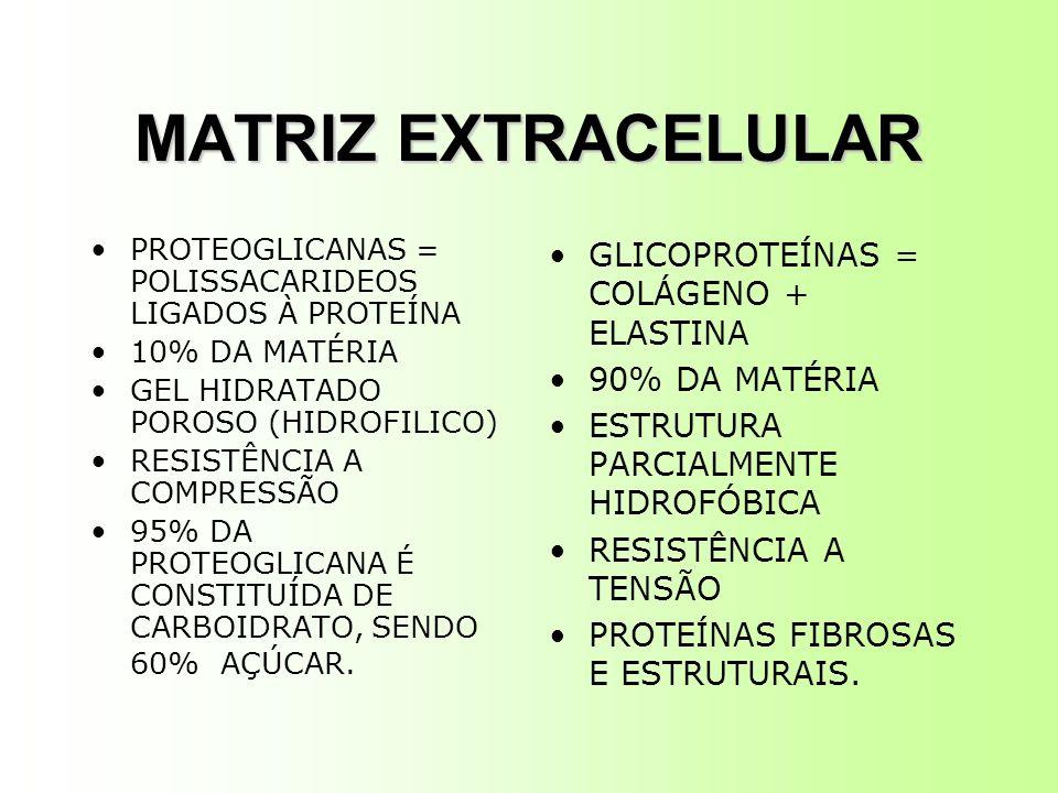 MATRIZ EXTRACELULAR PROTEOGLICANAS = POLISSACARIDEOS LIGADOS À PROTEÍNA 10% DA MATÉRIA GEL HIDRATADO POROSO (HIDROFILICO) RESISTÊNCIA A COMPRESSÃO 95% DA PROTEOGLICANA É CONSTITUÍDA DE CARBOIDRATO, SENDO 60% AÇÚCAR.