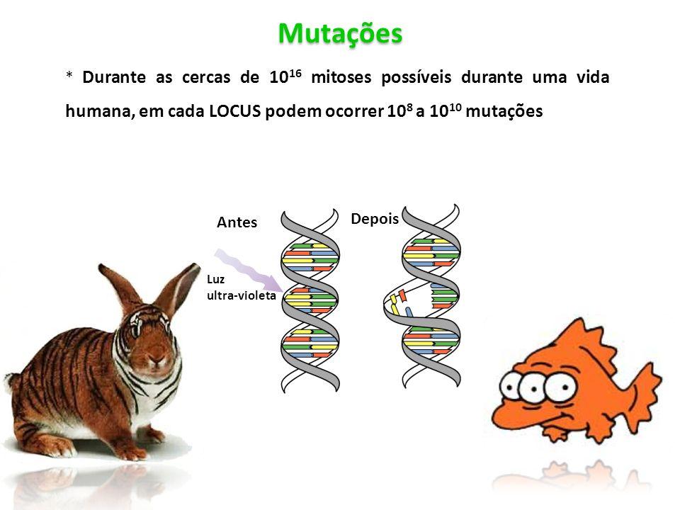 Antes * Durante as cercas de 10 16 mitoses possíveis durante uma vida humana, em cada LOCUS podem ocorrer 10 8 a 10 10 mutações Mutações Antes Depois