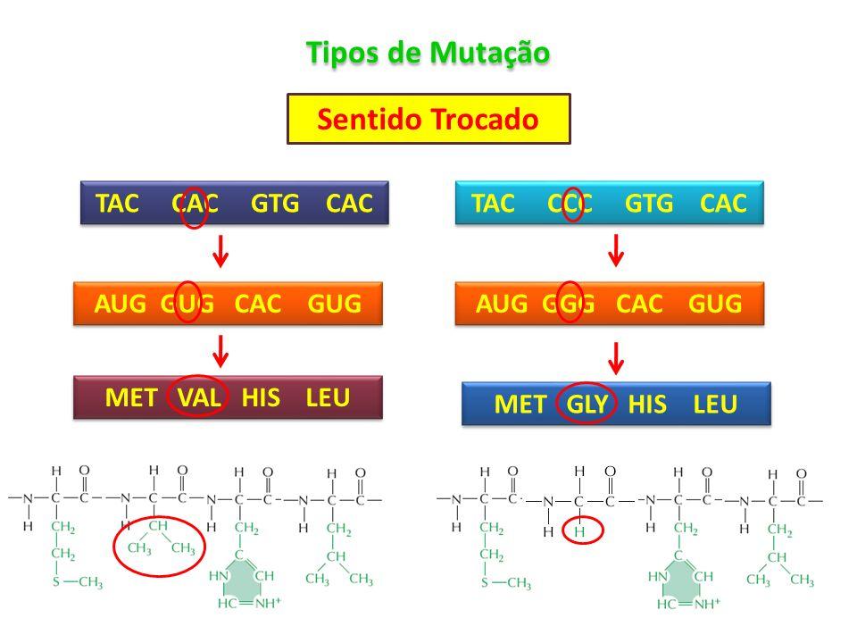 Tipos de Mutação Sentido Trocado TAC CAC GTG CAC AUG GUG CAC GUG MET VAL HIS LEU TAC CCC GTG CAC AUG GGG CAC GUG MET GLY HIS LEU