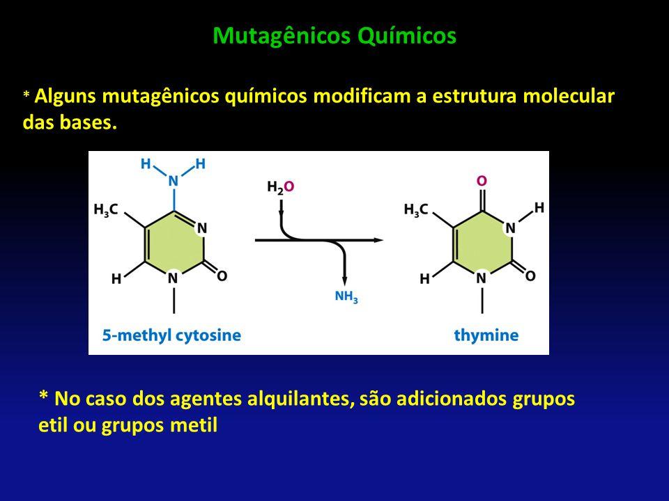 Mutagênicos Químicos * Alguns mutagênicos químicos modificam a estrutura molecular das bases. * No caso dos agentes alquilantes, são adicionados grupo