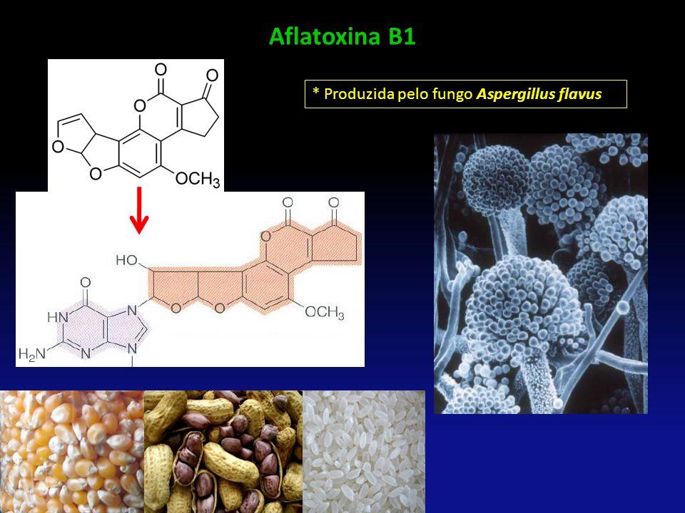 Aflatoxina B1 * Produzida pelo fungo Aspergillus flavus