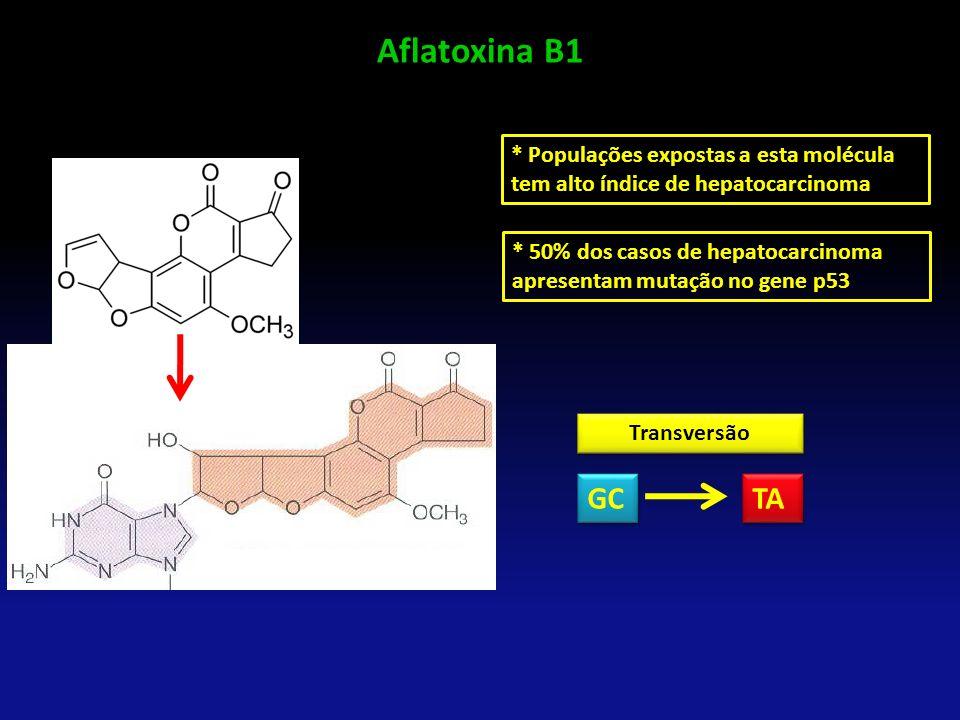 Aflatoxina B1 * Populações expostas a esta molécula tem alto índice de hepatocarcinoma * 50% dos casos de hepatocarcinoma apresentam mutação no gene p
