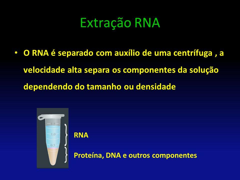 Extração RNA O RNA é separado com auxílio de uma centrífuga, a velocidade alta separa os componentes da solução dependendo do tamanho ou densidade RNA