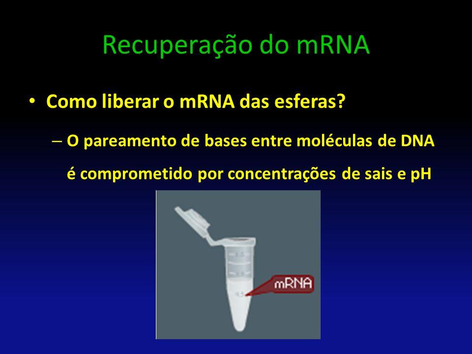 Recuperação do mRNA Como liberar o mRNA das esferas? – O pareamento de bases entre moléculas de DNA é comprometido por concentrações de sais e pH