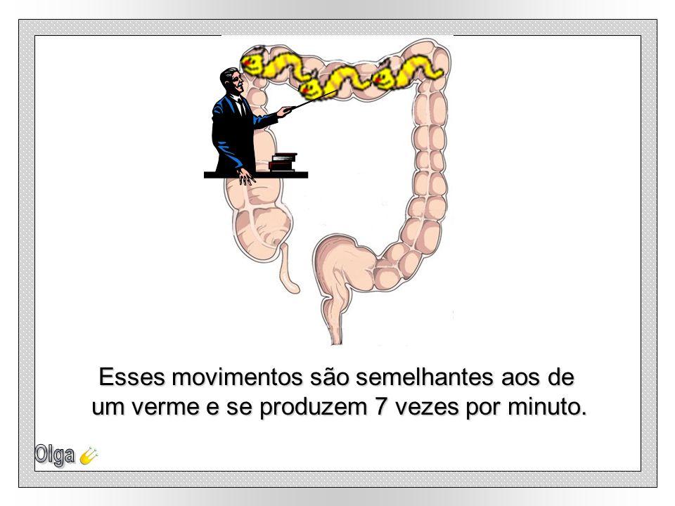 Esses movimentos são semelhantes aos de um verme e se produzem 7 vezes por minuto.