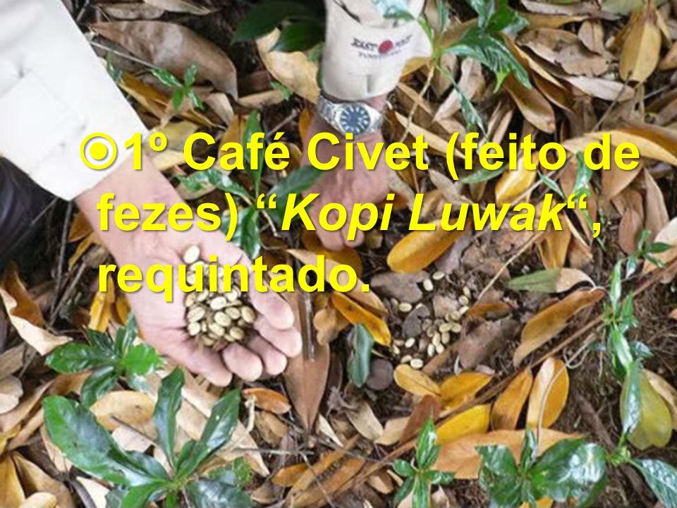 1º Café Civet (feito de fezes) Kopi Luwak, requintado. 1º Café Civet (feito de fezes) Kopi Luwak, requintado.