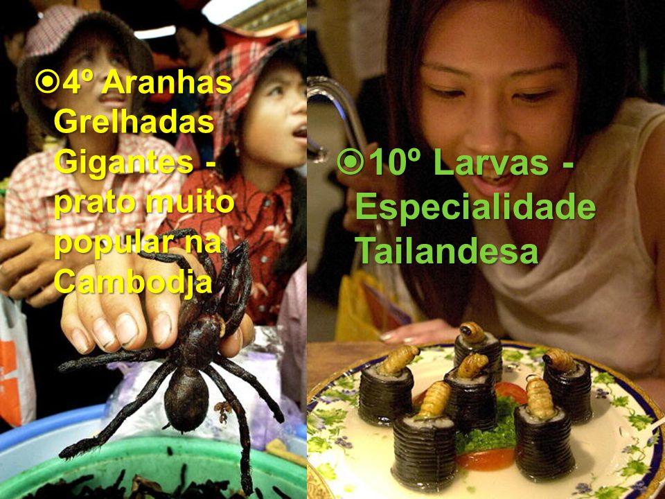 4º Aranhas Grelhadas Gigantes - prato muito popular na Cambodja 4º Aranhas Grelhadas Gigantes - prato muito popular na Cambodja 10º Larvas - Especiali