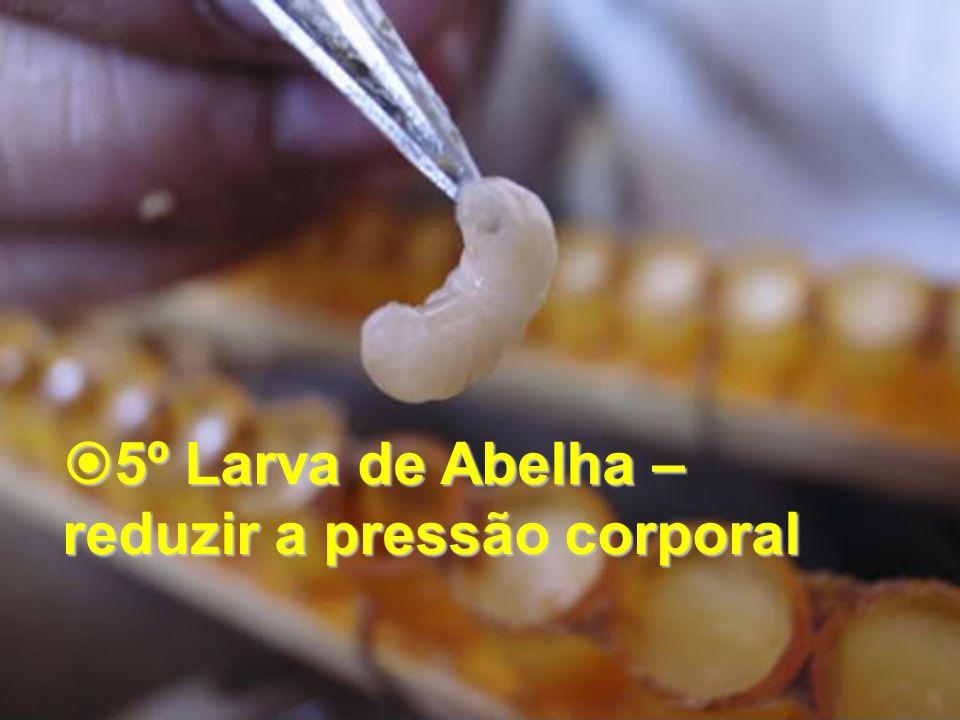 5º Larva de Abelha – 5º Larva de Abelha – reduzir a pressão corporal