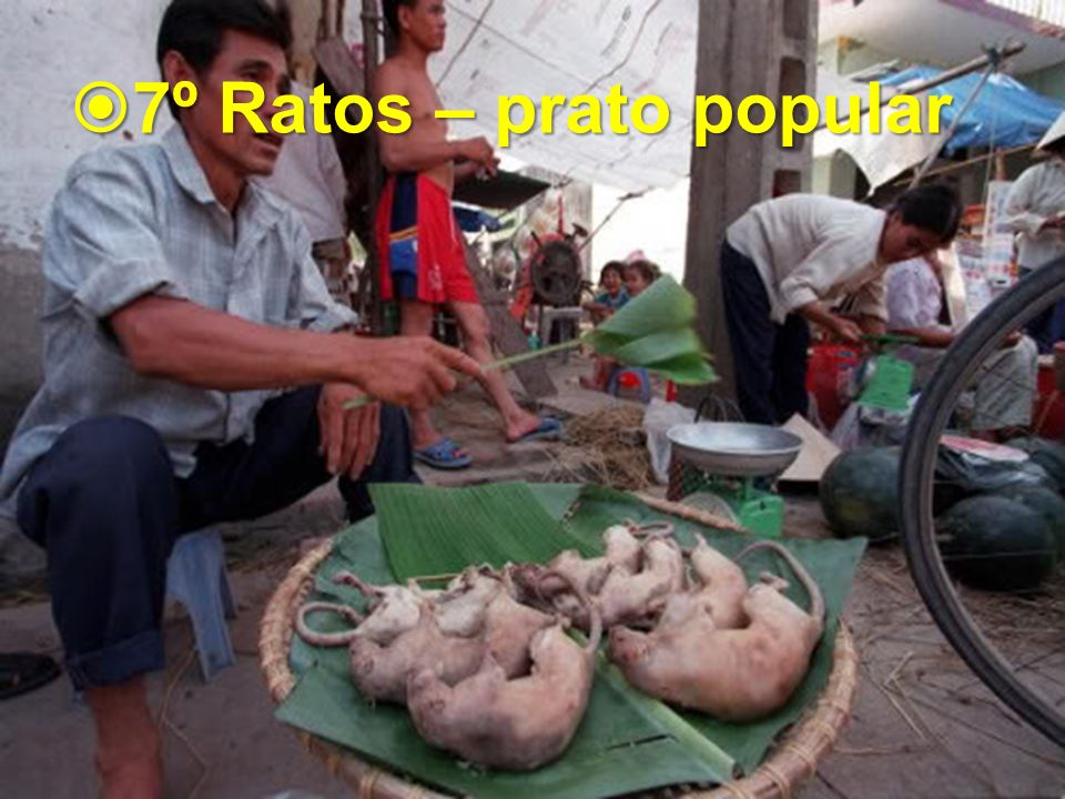 7º Ratos – prato popular 7º Ratos – prato popular