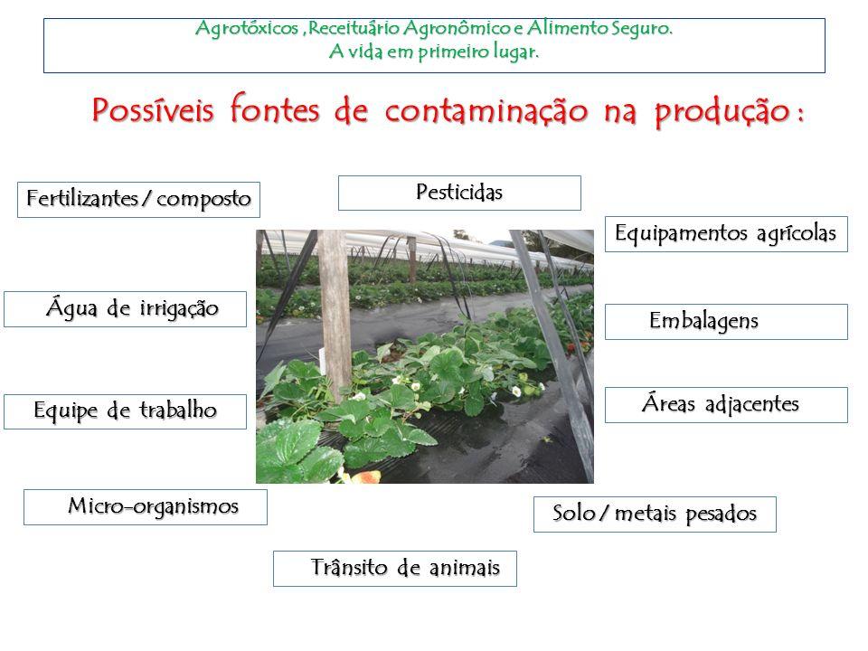 Possíveis fontes de contaminação na produção : Fertilizantes / composto Pesticidas Pesticidas Água de irrigação Água de irrigação Equipamentos agrícol