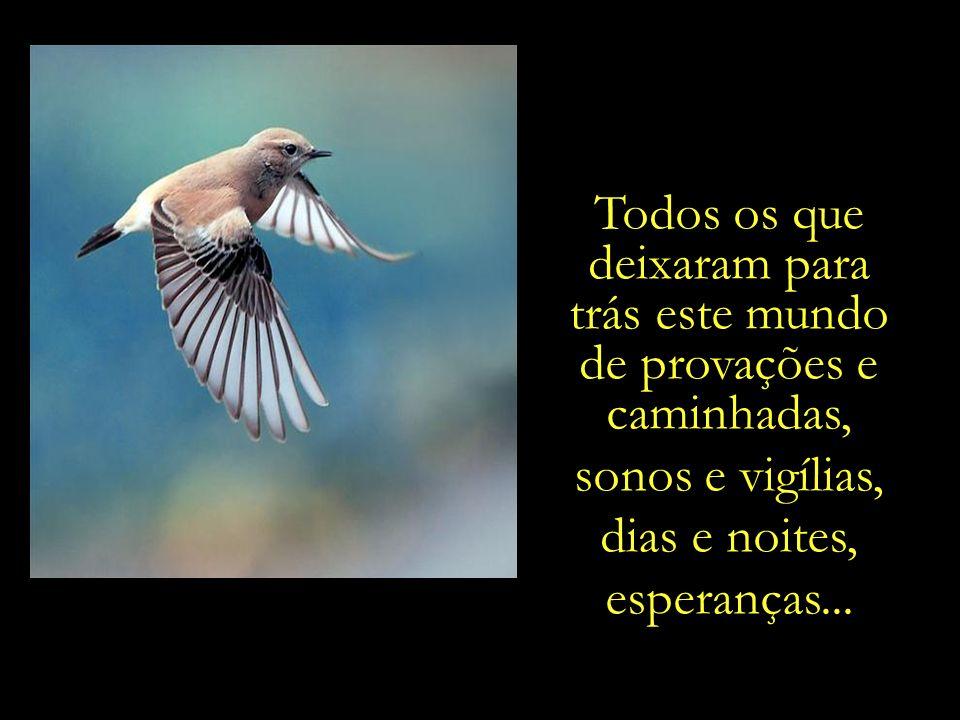 E ao deslizar pelo céu, as aves nos recordam dos nossos entes queridos que já partiram.