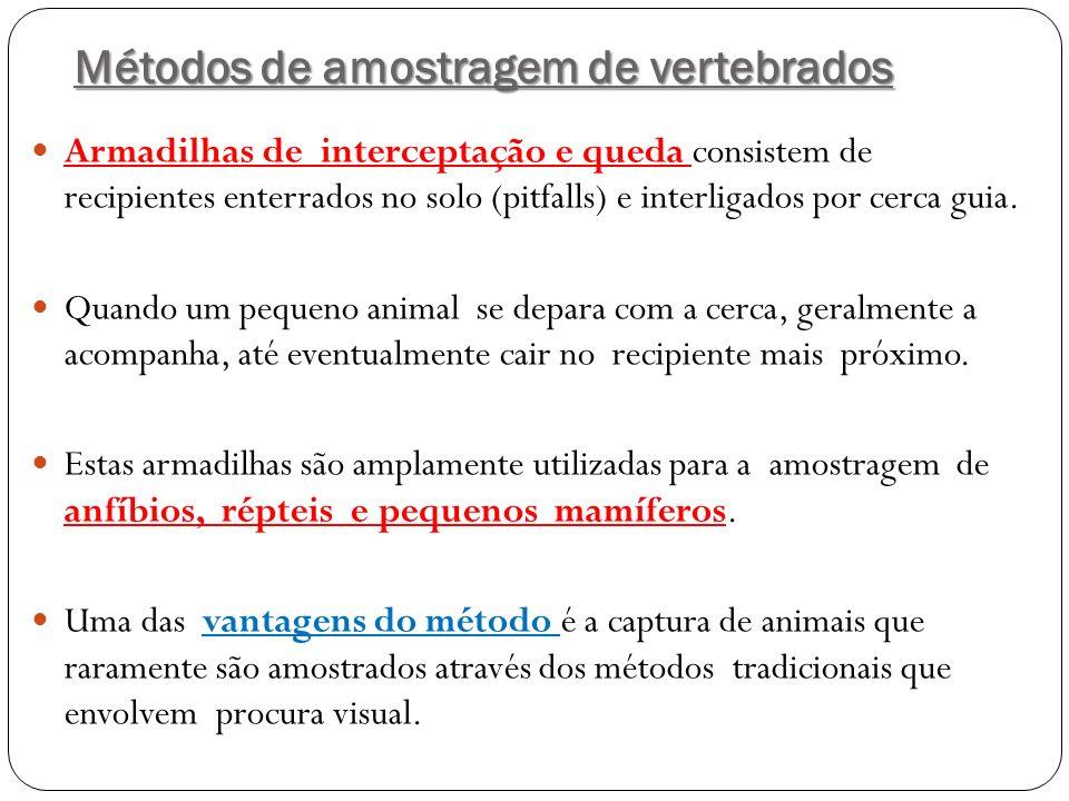 Pegada de Panthera onca registrada no módulo Limeira MD
