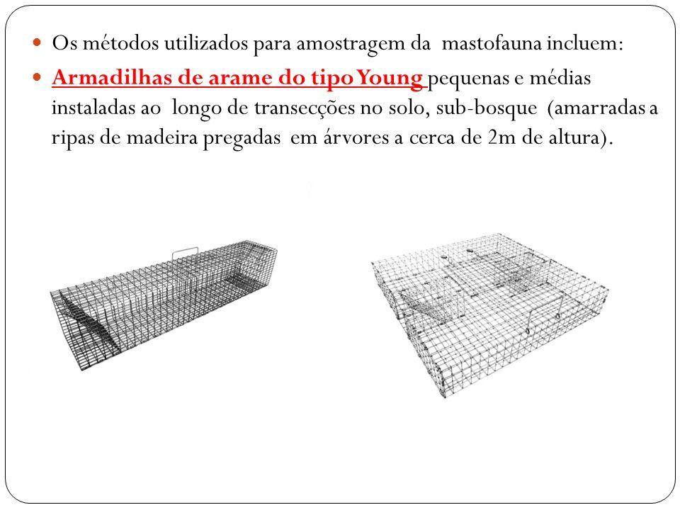 Os métodos utilizados para amostragem da mastofauna incluem: Armadilhas de arame do tipo Young pequenas e médias instaladas ao longo de transecções no