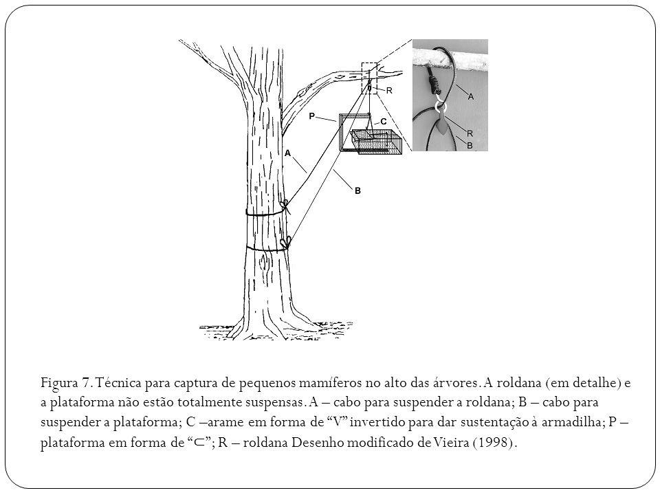 Figura 7. Técnica para captura de pequenos mamíferos no alto das árvores. A roldana (em detalhe) e a plataforma não estão totalmente suspensas. A – ca