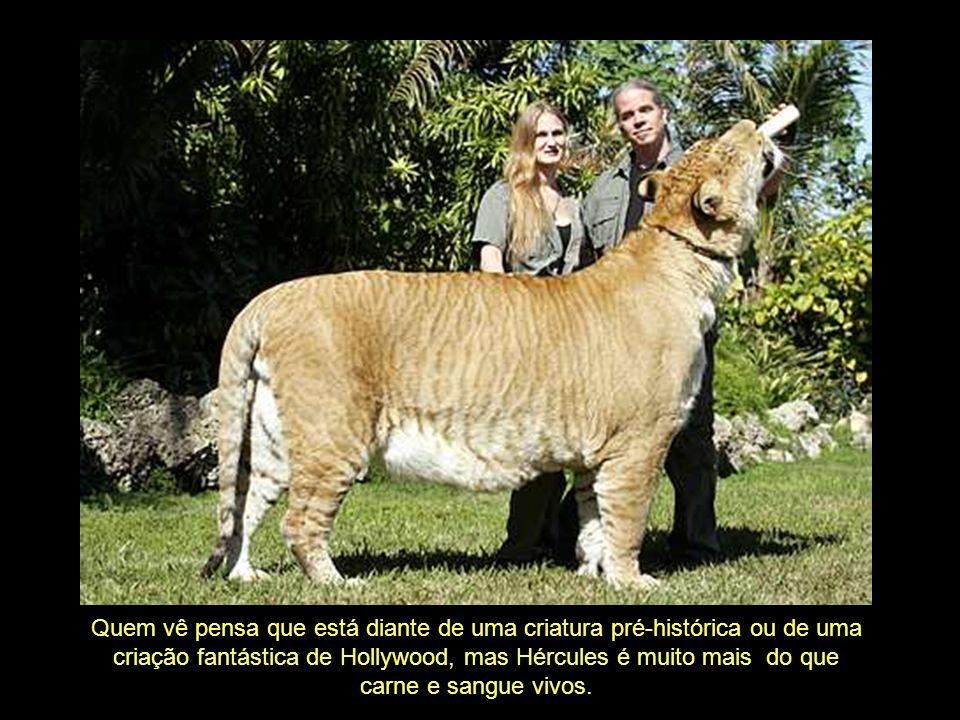 Acredita-se que o enorme tamanho que estes animais atingem ocorra pela ausência de genes que condicionem a produção de hormonas inibidoras do crescimento.