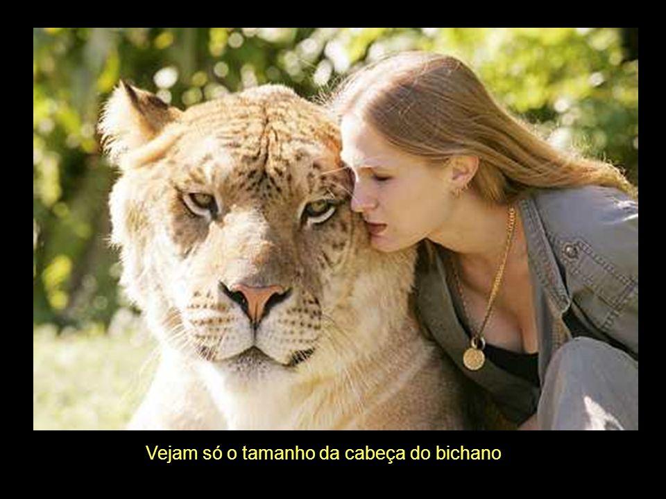 Tal como os tigres, os ligres têm a capacidade de nadar, algo que os leões não Conseguem. Podem correr à 80 Km por hora.