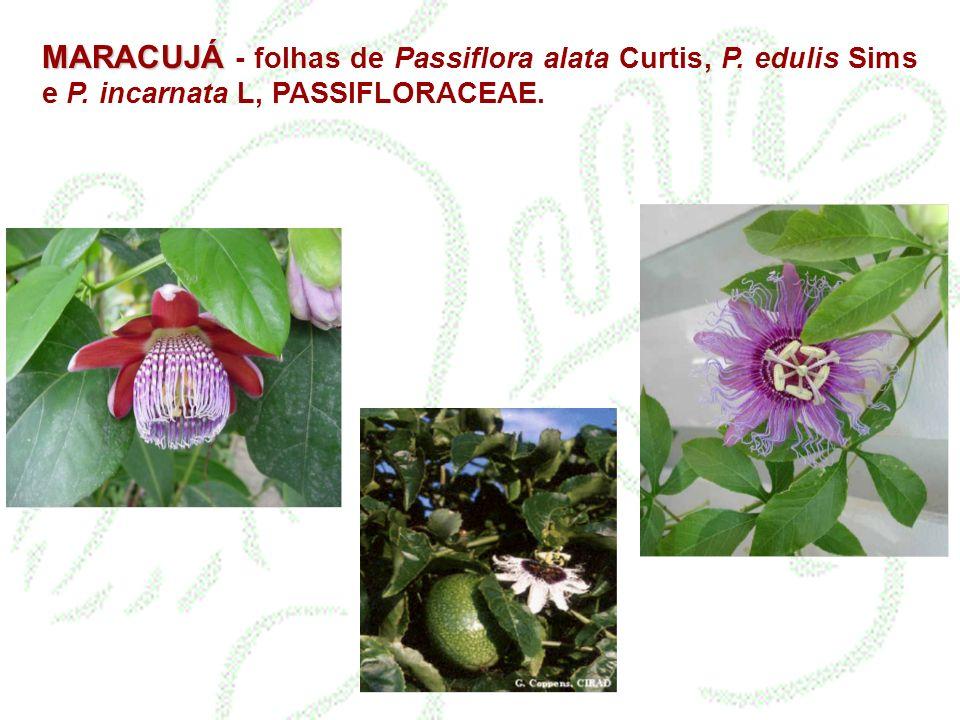 MARACUJÁ MARACUJÁ - folhas de Passiflora alata Curtis, P.