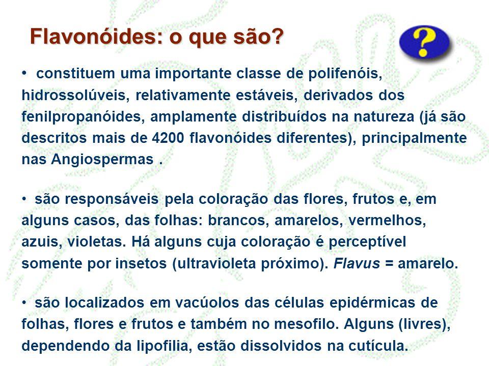 Flavonóides: o que são.