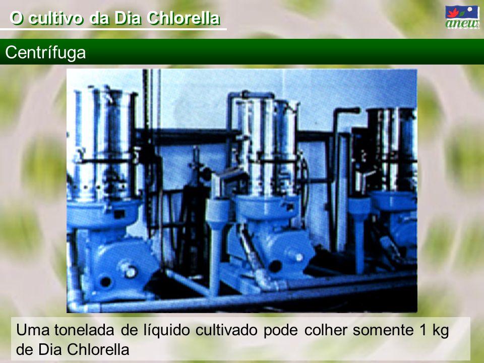 Uma tonelada de líquido cultivado pode colher somente 1 kg de Dia Chlorella Centrífuga O cultivo da Dia Chlorella