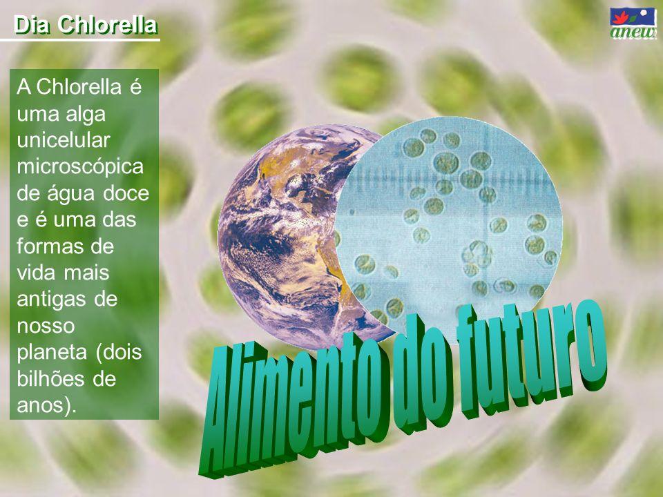 A Chlorella é uma alga unicelular microscópica de água doce e é uma das formas de vida mais antigas de nosso planeta (dois bilhões de anos). Dia Chlor
