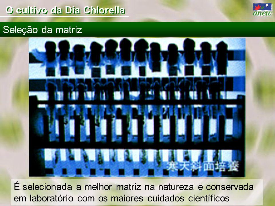 O cultivo da Dia Chlorella É selecionada a melhor matriz na natureza e conservada em laboratório com os maiores cuidados científicos Seleção da matriz