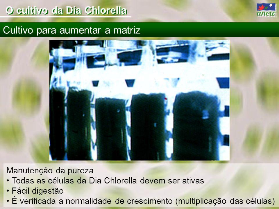 Manutenção da pureza Todas as células da Dia Chlorella devem ser ativas Fácil digestão É verificada a normalidade de crescimento (multiplicação das cé