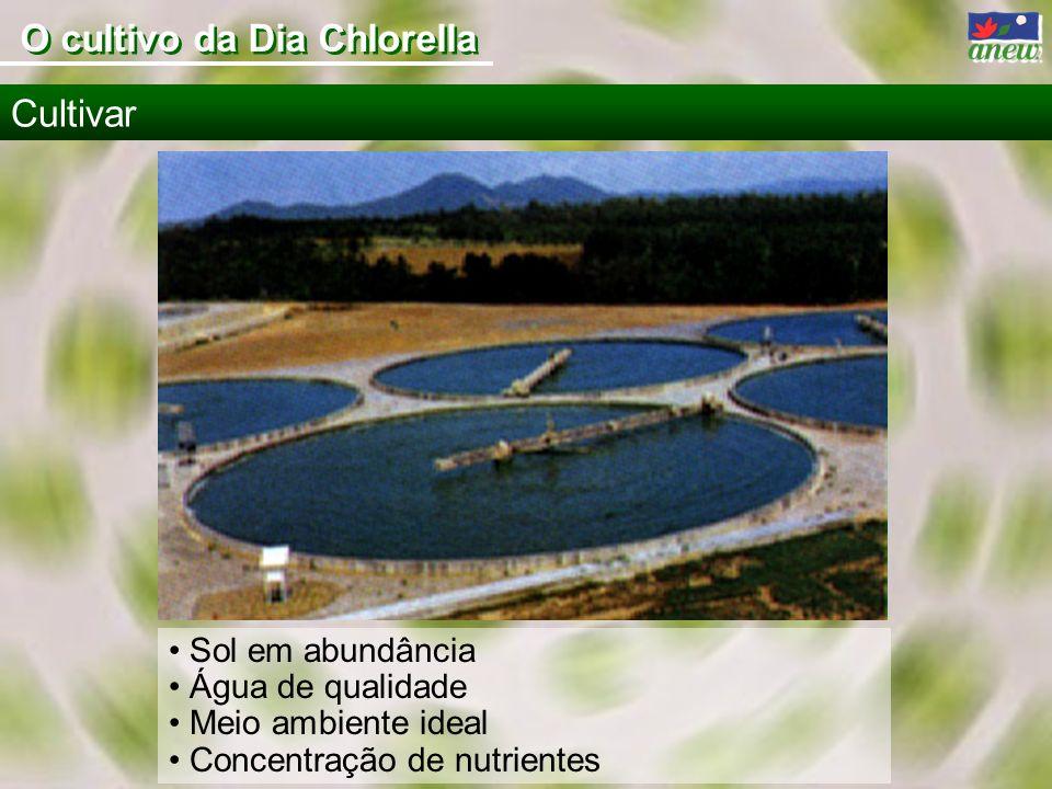 Sol em abundância Água de qualidade Meio ambiente ideal Concentração de nutrientes Cultivar O cultivo da Dia Chlorella