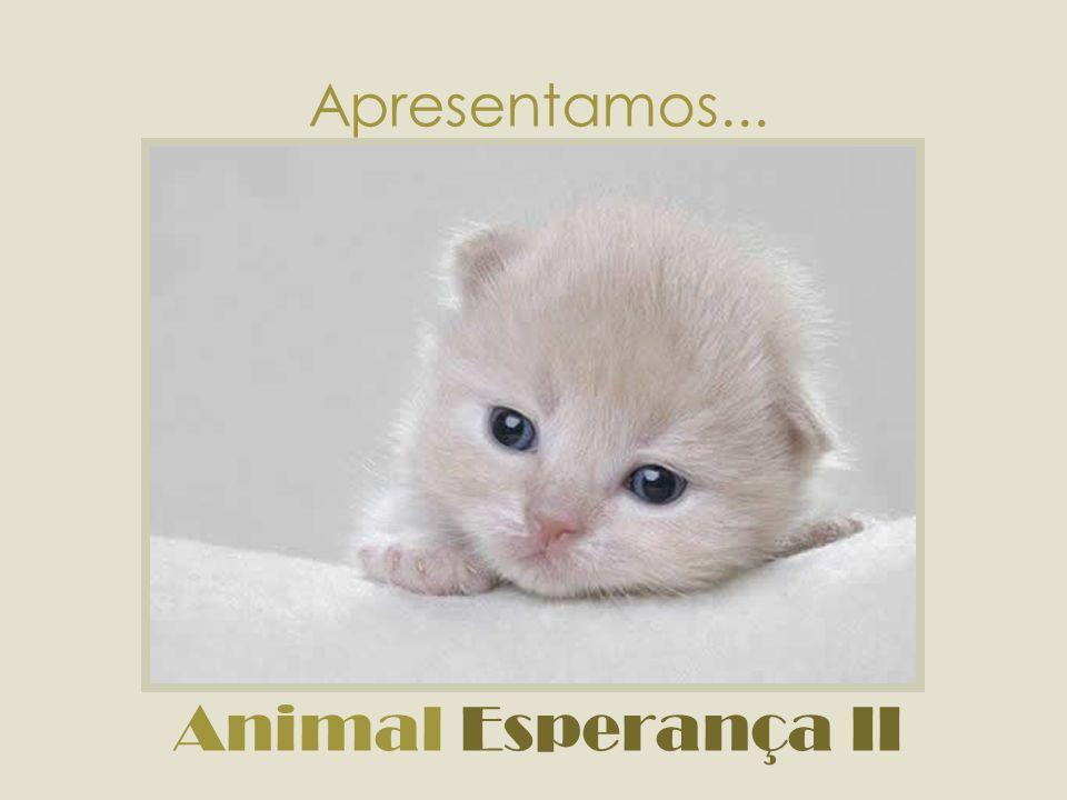 Animal não se compra.Animal não se vende. Animal não é mercadoria!!.