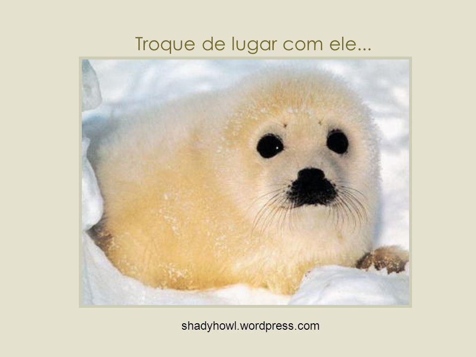 Usar peles de animais é vergonhoso!!!...Vamos esquecer esta idéia...!!!...olhe bem dentro dos olhos deste animal!!.