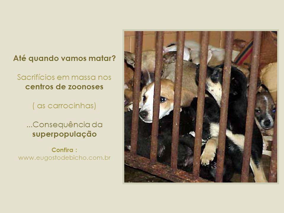 CARROCINHAS... Holocausto!!! Mais um crime que envergonha o Brasil !!!