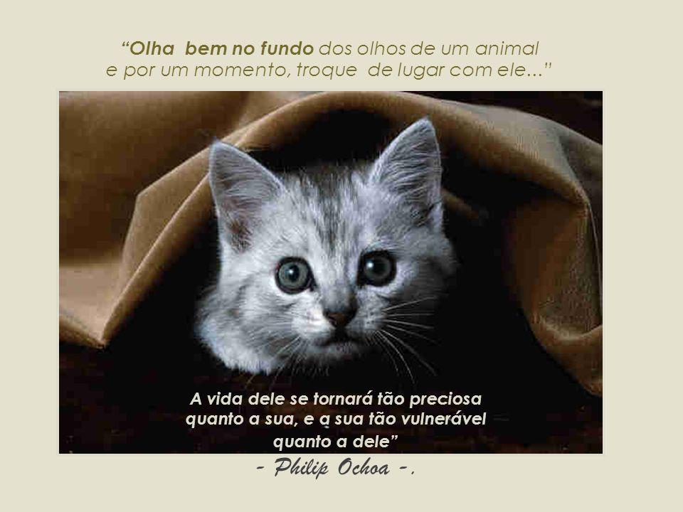 www.suipa.org.br www.svb.org.br www.institutoninarosa.org.br www.pea.org.br www.pea.org.br/crueldade/farra www.pea.org.br/crueldade/abatedouro Todo dia é dia...