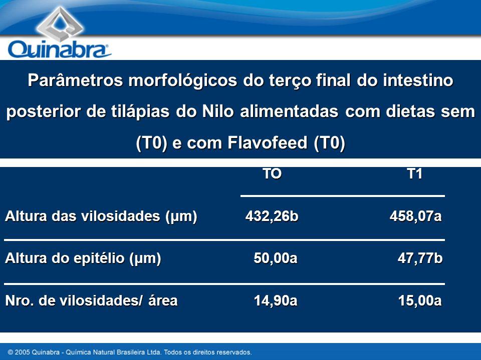 Parâmetros morfológicos do terço final do intestino posterior de tilápias do Nilo alimentadas com dietas sem (T0) e com Flavofeed (T0) TO T1 TO T1 Altura das vilosidades (μm)432,26b458,07a Altura do epitélio (μm) 50,00a 47,77b Nro.
