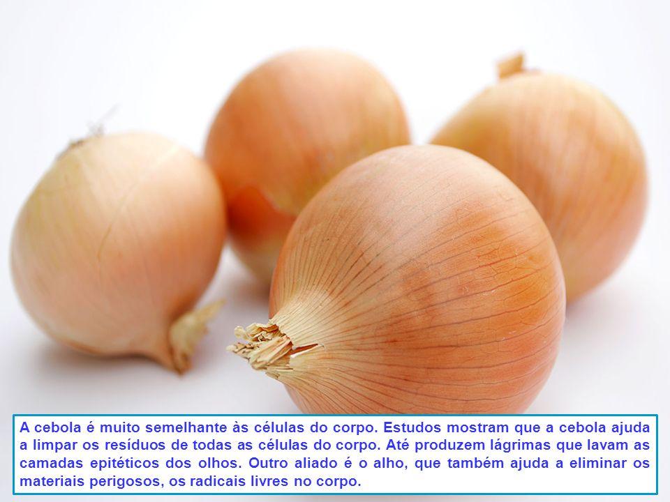 Laranjas, toranjas e outros citrinos assemelham as glândulas mamárias nas mulheres, e ajudam a saúde e fluxo de circulação linfática, dentro do peito.